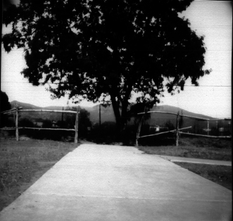 Walkway Leading to a Tree with Fence